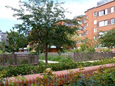 Jardins partagés à la cité-jardins de Suresnes - Photo : Sophie Brändström MUS